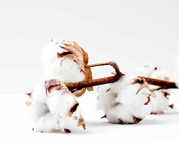 algodón orgánico natural